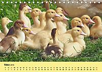 Gänse. Von wegen dumme Gans! (Tischkalender 2019 DIN A5 quer) - Produktdetailbild 3