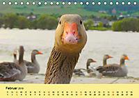 Gänse. Von wegen dumme Gans! (Tischkalender 2019 DIN A5 quer) - Produktdetailbild 2