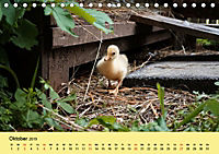 Gänse. Von wegen dumme Gans! (Tischkalender 2019 DIN A5 quer) - Produktdetailbild 10