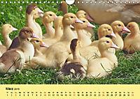 Gänse. Von wegen dumme Gans! (Wandkalender 2019 DIN A4 quer) - Produktdetailbild 3