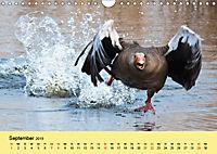 Gänse. Von wegen dumme Gans! (Wandkalender 2019 DIN A4 quer) - Produktdetailbild 9
