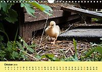 Gänse. Von wegen dumme Gans! (Wandkalender 2019 DIN A4 quer) - Produktdetailbild 10