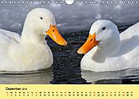 Gänse. Von wegen dumme Gans! (Wandkalender 2019 DIN A4 quer) - Produktdetailbild 12