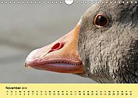 Gänse. Von wegen dumme Gans! (Wandkalender 2019 DIN A4 quer) - Produktdetailbild 11
