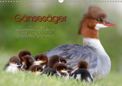 Gänsesäger - alleinerziehende Mütter im Schloßpark Nymphenburg (Wandkalender 2019 DIN A3 quer), Martina Gebert