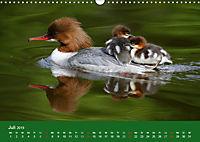 Gänsesäger - alleinerziehende Mütter im Schloßpark Nymphenburg (Wandkalender 2019 DIN A3 quer) - Produktdetailbild 7