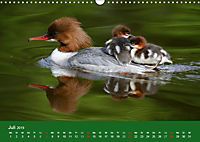 Gänsesäger - alleinerziehende Mütter im Schlosspark Nymphenburg (Wandkalender 2019 DIN A3 quer) - Produktdetailbild 7