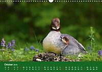 Gänsesäger - alleinerziehende Mütter im Schlosspark Nymphenburg (Wandkalender 2019 DIN A3 quer) - Produktdetailbild 10