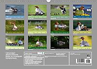 Gänsesäger - alleinerziehende Mütter im Schlosspark Nymphenburg (Wandkalender 2019 DIN A3 quer) - Produktdetailbild 13