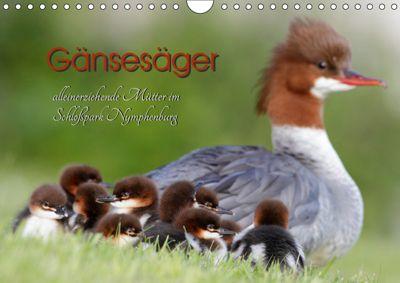 Gänsesäger - alleinerziehende Mütter im Schlosspark Nymphenburg (Wandkalender 2019 DIN A4 quer), Martina Gebert