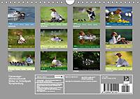 Gänsesäger - alleinerziehende Mütter im Schlosspark Nymphenburg (Wandkalender 2019 DIN A4 quer) - Produktdetailbild 13