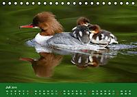 Gänsesäger - alleinerziehende Mütter im Schlosspark Nymphenburg (Tischkalender 2019 DIN A5 quer) - Produktdetailbild 7