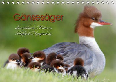 Gänsesäger - alleinerziehende Mütter im Schlosspark Nymphenburg (Tischkalender 2019 DIN A5 quer), Martina Gebert