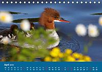 Gänsesäger - alleinerziehende Mütter im Schlosspark Nymphenburg (Tischkalender 2019 DIN A5 quer) - Produktdetailbild 4