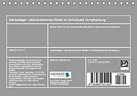 Gänsesäger - alleinerziehende Mütter im Schlosspark Nymphenburg (Tischkalender 2019 DIN A5 quer) - Produktdetailbild 13