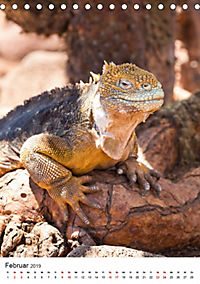 Galapagos - Atemberaubende Tierwelt (Tischkalender 2019 DIN A5 hoch) - Produktdetailbild 2