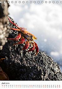 Galapagos - Atemberaubende Tierwelt (Tischkalender 2019 DIN A5 hoch) - Produktdetailbild 6