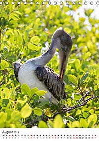 Galapagos - Atemberaubende Tierwelt (Tischkalender 2019 DIN A5 hoch) - Produktdetailbild 8