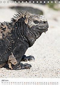 Galapagos - Atemberaubende Tierwelt (Tischkalender 2019 DIN A5 hoch) - Produktdetailbild 7
