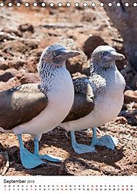 Galapagos - Atemberaubende Tierwelt (Tischkalender 2019 DIN A5 hoch) - Produktdetailbild 9