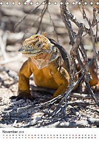 Galapagos - Atemberaubende Tierwelt (Tischkalender 2019 DIN A5 hoch) - Produktdetailbild 11