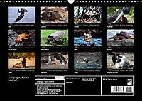 Galapagos. Fauna hautnah (Wandkalender 2019 DIN A3 quer) - Produktdetailbild 13
