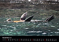 Galapagos. Fauna hautnah (Wandkalender 2019 DIN A3 quer) - Produktdetailbild 11