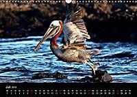 Galapagos. Fauna hautnah (Wandkalender 2019 DIN A3 quer) - Produktdetailbild 7