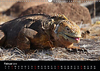 Galapagos. Fauna hautnah (Wandkalender 2019 DIN A3 quer) - Produktdetailbild 2