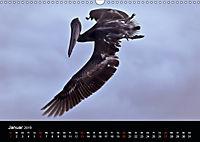 Galapagos. Fauna hautnah (Wandkalender 2019 DIN A3 quer) - Produktdetailbild 1