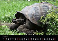 Galapagos. Fauna hautnah (Wandkalender 2019 DIN A3 quer) - Produktdetailbild 6