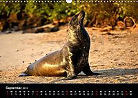 Galapagos. Fauna hautnah (Wandkalender 2019 DIN A3 quer) - Produktdetailbild 9