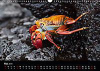Galapagos. Fauna hautnah (Wandkalender 2019 DIN A3 quer) - Produktdetailbild 5