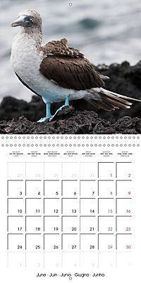 Galapagos magnificent islands (Wall Calendar 2019 300 × 300 mm Square) - Produktdetailbild 6