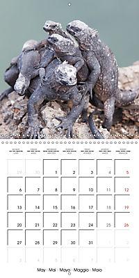 Galapagos magnificent islands (Wall Calendar 2019 300 × 300 mm Square) - Produktdetailbild 5