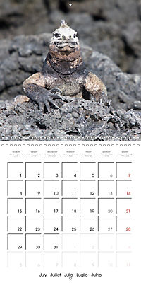 Galapagos magnificent islands (Wall Calendar 2019 300 × 300 mm Square) - Produktdetailbild 7