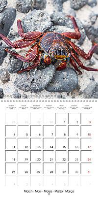 Galapagos magnificent islands (Wall Calendar 2019 300 × 300 mm Square) - Produktdetailbild 3