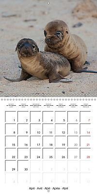 Galapagos magnificent islands (Wall Calendar 2019 300 × 300 mm Square) - Produktdetailbild 4