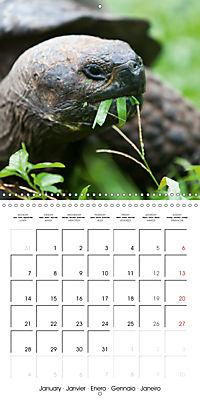 Galapagos magnificent islands (Wall Calendar 2019 300 × 300 mm Square) - Produktdetailbild 1