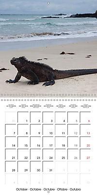 Galapagos magnificent islands (Wall Calendar 2019 300 × 300 mm Square) - Produktdetailbild 10