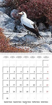 Galapagos magnificent islands (Wall Calendar 2019 300 × 300 mm Square) - Produktdetailbild 9