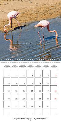 Galapagos magnificent islands (Wall Calendar 2019 300 × 300 mm Square) - Produktdetailbild 8
