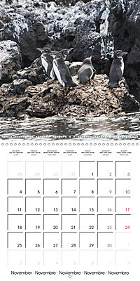 Galapagos magnificent islands (Wall Calendar 2019 300 × 300 mm Square) - Produktdetailbild 11