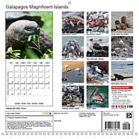Galapagos magnificent islands (Wall Calendar 2019 300 × 300 mm Square) - Produktdetailbild 13
