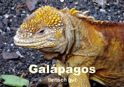 Galápagos - tierisch gut (Wandkalender 2019 DIN A2 quer), Rudolf Blank