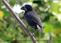 Galápagos - tierisch gut (Wandkalender 2019 DIN A2 quer) - Produktdetailbild 3