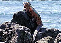 Galápagos - tierisch gut (Wandkalender 2019 DIN A2 quer) - Produktdetailbild 2