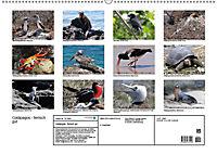 Galápagos - tierisch gut (Wandkalender 2019 DIN A2 quer) - Produktdetailbild 13