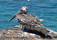 Galápagos - tierisch gut (Wandkalender 2019 DIN A2 quer) - Produktdetailbild 6