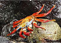 Galápagos - tierisch gut (Wandkalender 2019 DIN A2 quer) - Produktdetailbild 5